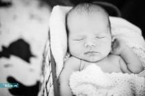 Silvisual-Newborn-089